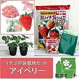 イチゴの袋栽培セット:ベルポットとイチゴ苗/アイベリー[大実品種!] ノーブランド品