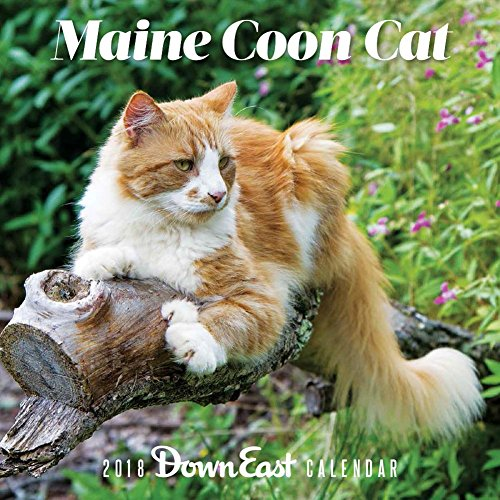 Maine Coon Cat 2018 Calendar (Down East)