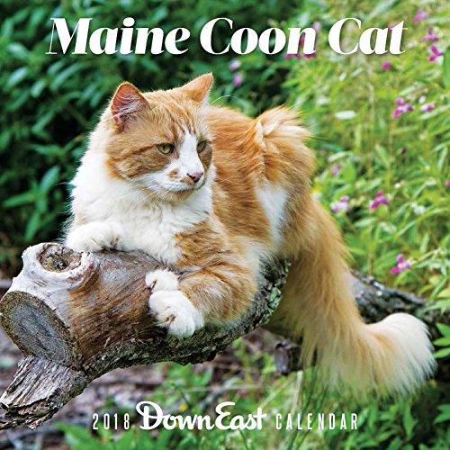 Maine Coon Cat 2018 Calendar (Down East)