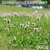 シロクローバー:白クローバー(シロツメグサ)500g入り[タネ][2?5月まき、8?10月まき]