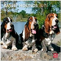 Basset Hounds 2013 Calendar