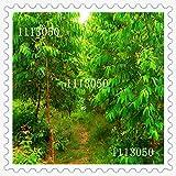 2016新ユーカリの種子庭の植物盆栽種子-50pcsの品種インタレストツリーの種子多年生常緑