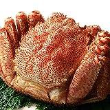 毛蟹 1尾 1kg 特大 最高ランク 堅蟹