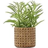 SAROSORA Ceramic Flower Pots Succulent Planter with Drainage Hole Weave Pattern for Home Garden Decoration (1, 4.3'')