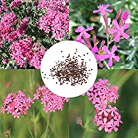 Portal Cool New Nice Adorable Flower Fragrant Blooms High Snow Wheel Seeds WST