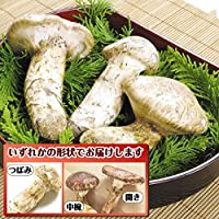 国華園 北米産 松茸 約150g1箱 まつたけ 野菜 冷蔵便