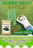 ニューカナダグリーン