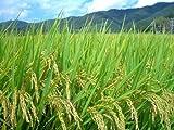 「農家さんが食べる米」2016年産和束の極上新米 京都府和束産ひのひかり(玄米) 30kg