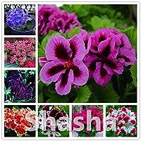 ホームガーデン用盆栽ゼラニウム100個日本のイエローPpleblossomローズゼラニウム開花ゼラニウムバルコニーの植物