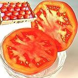 トマト 産地厳選 千葉中心 とまと 箱 4kg 桃太郎 手作り お特用 大容量 業務用 (秀品・贈答用)