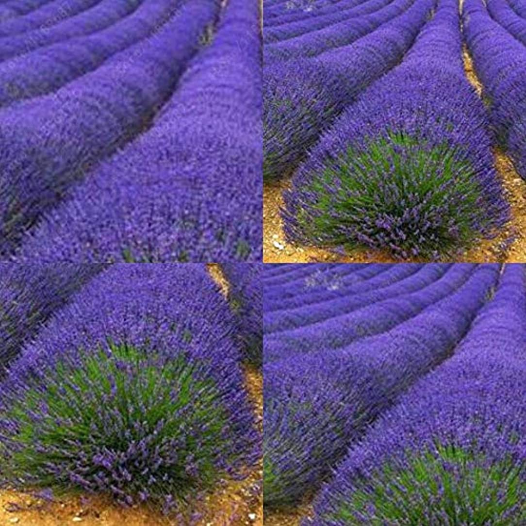 トラクター異なる症候群Portal Cool Type2 200Pcs: New Garden Aromatic Spices Variety Herb Seeds Plant Vegetable Lavender Herb