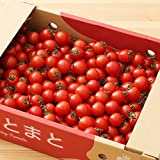 九州 熊本産 ( 特別栽培農作物 ) ミニトマト 1ケース 3kg 新鮮 生 産地直送