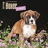 【並行輸入品】Boxer Puppies 2014 Small Wall Calendar