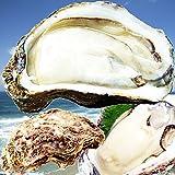天然岩牡蠣(活) たっぷり2キロ詰め込んで(訳あり大きさ色々5個-18個程度)鳥取産