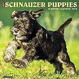 Just Schnauzer Puppies 2018 Calendar