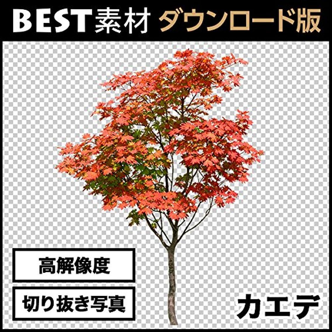 【BEST素材】高解像度の切り抜き写真_カエデ01 [ダウンロード]