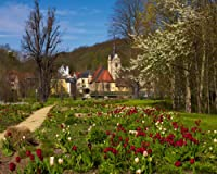 Tulips at Hofwiesen Park and District of untermhaus withの教会セントメアリー、Gera、チューリンゲン、ドイツGicleeアートプリントポスターまたはキャンバス 24 x 30 1750-661454_24X30