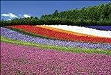 【Amazon.co.jp 限定】花咲く丘 ファーム富田 中富良野町 ポストカード3枚セット P3-021