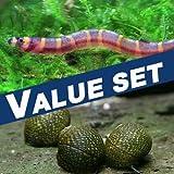 【バリューセット】▼クーリーローチ(約4-5cm)(4匹)+石巻貝(10匹)[生体]
