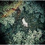【Amazon.co.jp限定】スターライトキセキ Ark (初回限定盤B)(DVD付)【特典:ステッカーシート付】