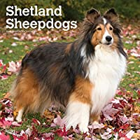 Shetland Sheepdogs 2019 Calendar