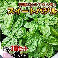 スイートバジル9cmポット苗 お買い得3個セット【ハーブ苗9cmポット/3個セット】ハーブの中で一番人気!!沢山あるバジル品種の中でも香りが良く日本でも定着したハーブです。イタリア料理に多く使われる品種は「バジル」「バジリコ」あるいは「スイートバジル (Sweet basil)」の名で知られています。【品種で選べるハーブ苗】【即出荷/プライム送料込み価格】