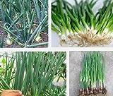 野菜のエシャロットの種子、四季ニラ種子、タマネギの種子は、私はオリジナルパッケージを発芽したい、200個/袋ガーデンボンズ