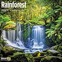 Rain Forest Wall Calendar 2020 (Nature)