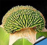 昇進!天体盆栽 - サボテン - 鉢植えガーデンファミリー抗放射線100 PCS/パック、#JOJEB0