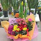 季節の鉢植え 寄せ鉢ギフトLL 3から5種類の鉢花や観葉植物をかごにおまかせアレンジ