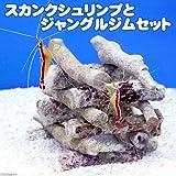 (海水魚 エビ)スカンクシュリンプ(2匹)とジャングルジムセット(1セット) 本州・四国限定[生体]