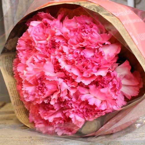 〔エルフルール〕ピンクカーネーションの花束 20本 母の日 ギ...