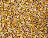200 Yellow Dentコーン、最も人気のあるオープン受粉黄色の品種が栽培されました!