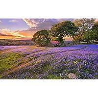 青い花、木、家、日没 キャンバスの 写真 ポスター 印刷 旅行 風景 景色 - (105cmx70cm)