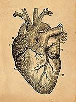 Human heart anatomy sketh vintage-styleアートプリント 12x16 inch