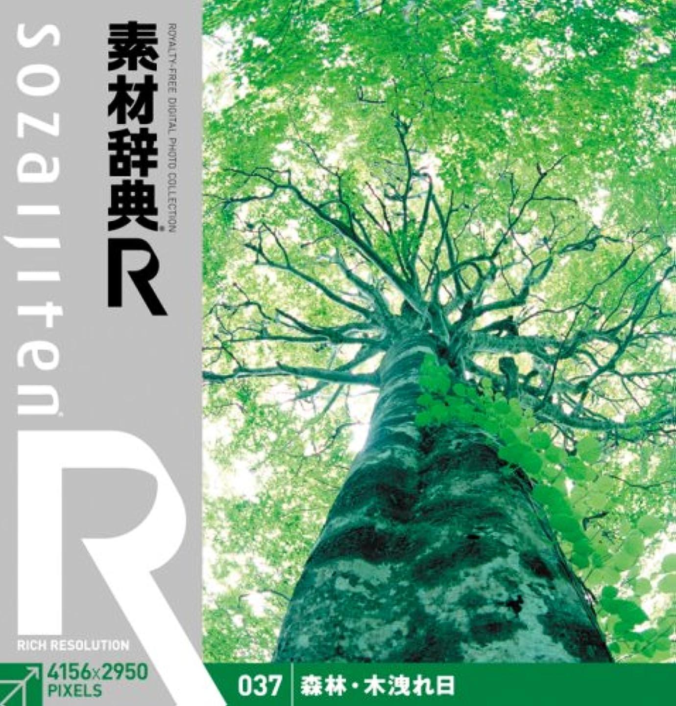 想定週末発揮する素材辞典[R(アール)] 037 森林?木洩れ日