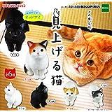 見上げる猫 [全6種セット(フルコンプ)]