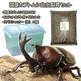 (昆虫)国産カブトムシ幼虫飼育セット(幼虫3匹付き) 本州・四国限定[生体]