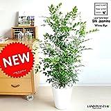 LAND PLANTS シルクジャスミン 白セラアート鉢