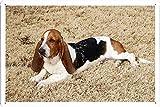レイジードッグのティンサイン 金属看板 ポスター / Tin Sign Metal Poster of The Lazy Dog