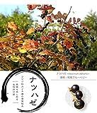 ■野生のブルーベリー■ ナツハゼ 根巻き苗 庭木 低木