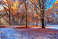 CSFOTO バックグラウンド 秋の森 美しい 赤 落葉 写真 背景 黄色 葉 晴れる 公園 通路 秋 風景 木 サンレイ グルーブ バケーション 写真 スタジオ 小道具 壁紙