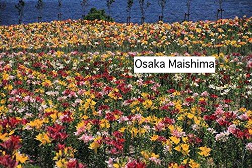 Osaka Maishima (Swedish Edition)