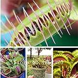 300個の一般的なハエトリソウ種子盆栽鉢植えハエジゴク種子Muscipula植物の花の種子テラスガーデン食虫植物種子