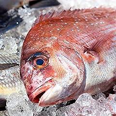 築地魚群 養殖 鯛 たい 国産 1尾 1kg前後サイズ
