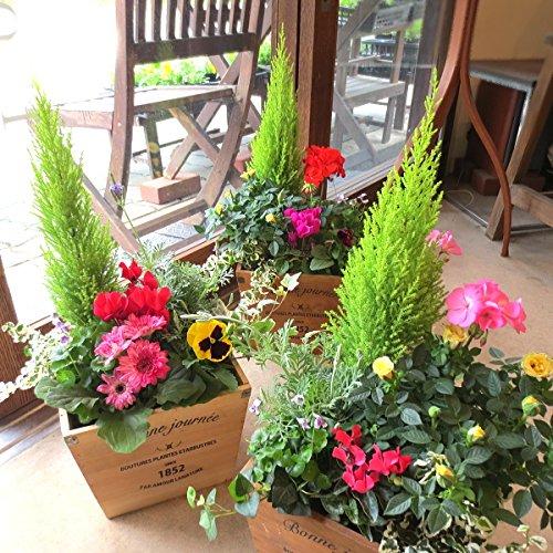 季節のおまかせ寄せ植え(鉢色選べる♪スクエアウッドボックス鉢植え) (ブラウン)