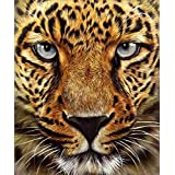 5D Diamond Painting Kit Full Drill, DIY Arts Crafts Accessories Wall Stickers for Living Room Staring Tiger (12X14inches/30X35cm)