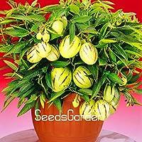 100ピースロット本物のメロンツリー種子ペピーノ種子フルーツ種子非gmoオーガニ