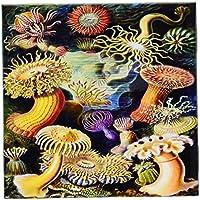 フローレンUnderwater Animals–1800s有名なドイツBiologist Illustration of Sea life. Jpg–タイル 6-Inch-Ceramic ct_98543_2