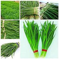 100個/袋中華ぶどう品種グリーングリーンGMO以外のおいしいジューシーなレーク野菜園植物花鉢プランター